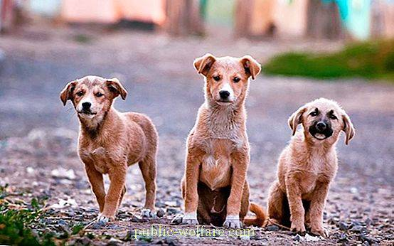 Catching stray dogs: good or bad
